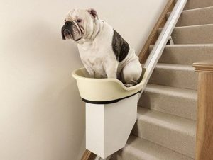 Stairlifts for pets - blog